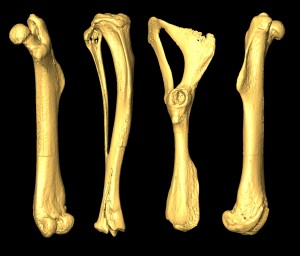 Кости на 3D принтере