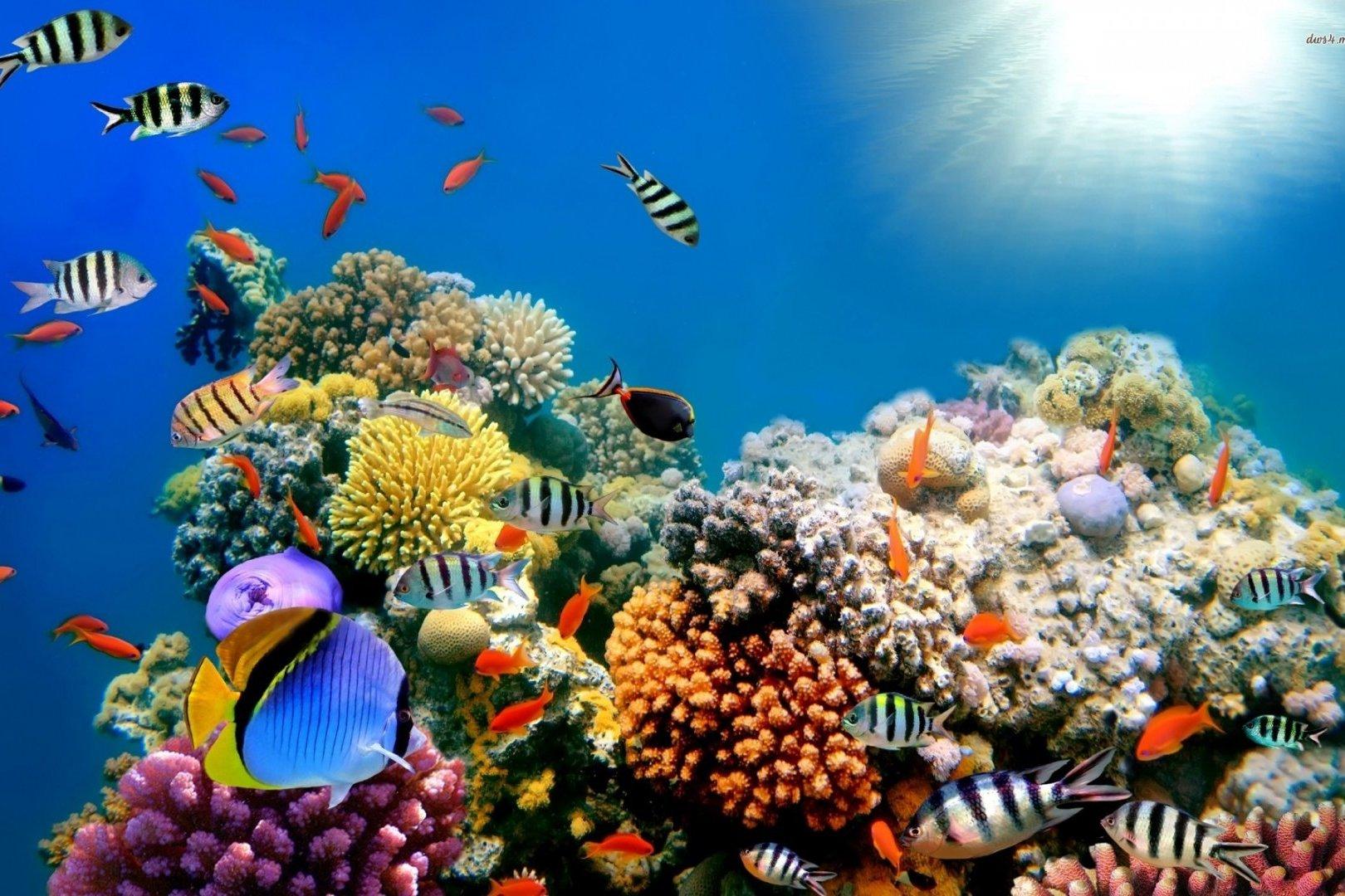 3D печать риф