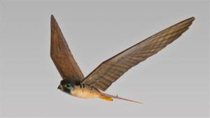 3Drobirds2