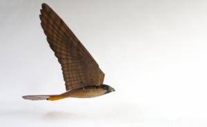 3Drobirds3
