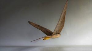 3Drobirds5