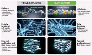 3D печать органов фото