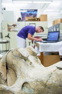 3D сканирование скелета мамонта