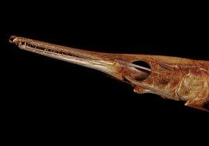 3D сканирование всех видов рыб