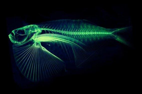 3D модели рыб