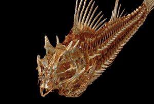 3д сканирование всех видов рыб