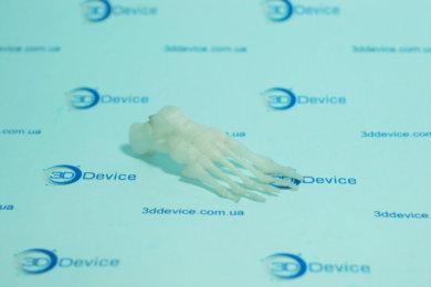 Миниатюрная 3D модель костей стопы, напечатанная на 3D принтере