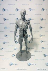 Анатомические 3D модели для 3D печати