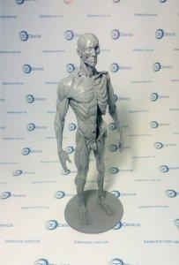 Анатомические 3D модели печать на 3D принтере