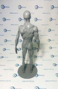 Анатомические 3D модели под печать на 3D принтере