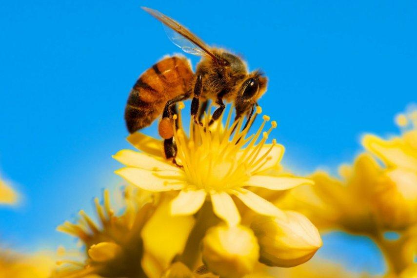 Пчелиное жало как прототип 3D печатной иглы